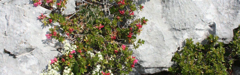 Pflanzendetails