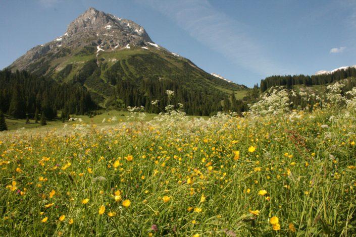 Omesberg-Blick im Sommer